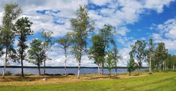 Trær og innsjø