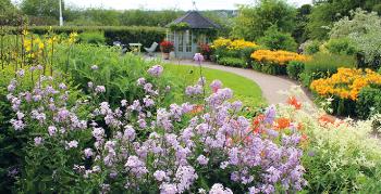 Bildet kan inneholde: blomst, blomstrende plante, hage, anlegg, botanisk hage.