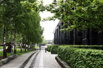 Bildet kan inneholde: grønn, tre, natur, vegetasjon, woody plante.